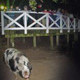 Nachts im Tierpark