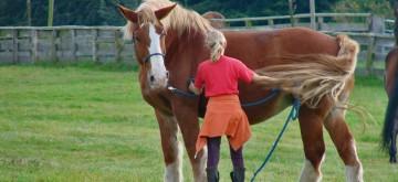 Kinderfreizeit Pferdefluestern kann jeder lernen