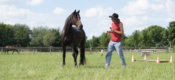 Pferdefluestern Aufbaukurs