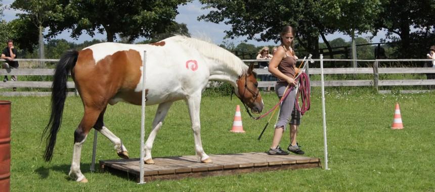 Pferdefluestern Individuelles Natural Horsemanship