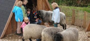 Angebot Alte Haus- und Nutztierrassen / Rauwolliges Pommernschaf