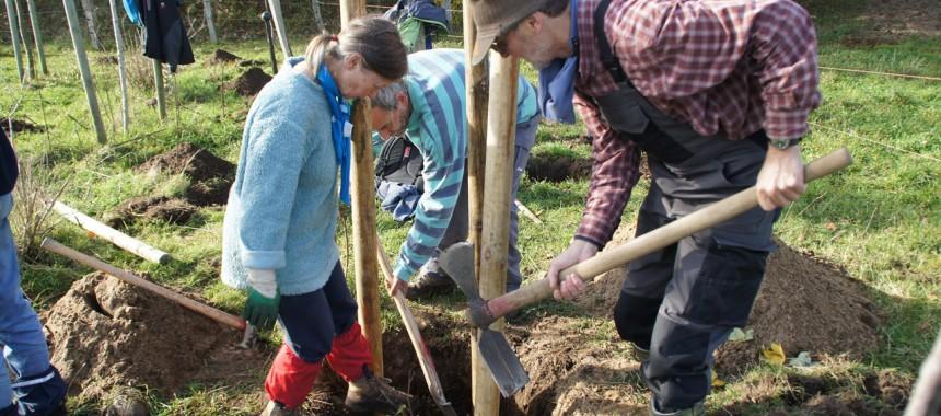 Bergwaldprojekt_UmweltstiftungGreenpeace-2_c_LisaIwon_ArcheWarder