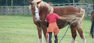 Angebot Pferdefluestern kann jeder lernen