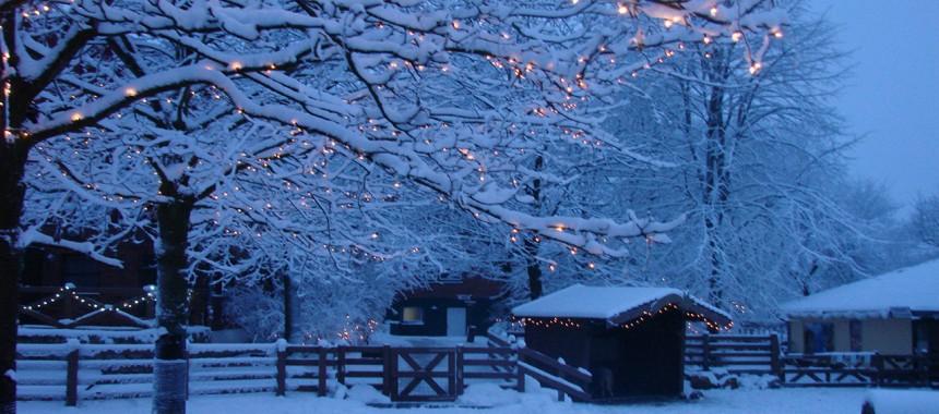 Winterlandschaft3_c_LisaIwon_ArcheWarder