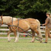 Zeitreise Pferd